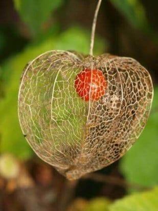 Herz im Herzen 1