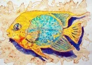 Fisch 11 1