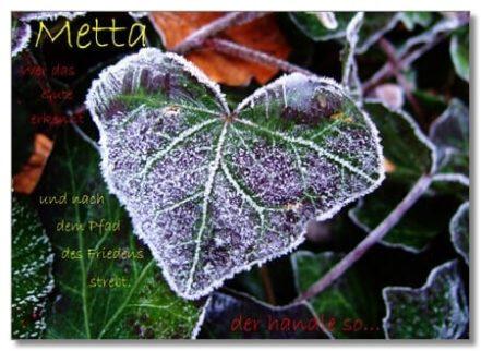 Postkarte Metta