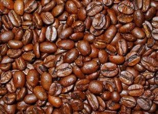 Coffea_arabica_030_db