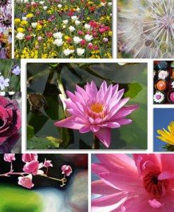 10er Set Blüten und Blumen