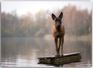 Postkarte See-Hund