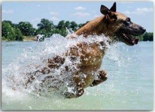 Postkarte Waterboy