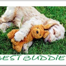Postkarte Best Buddies