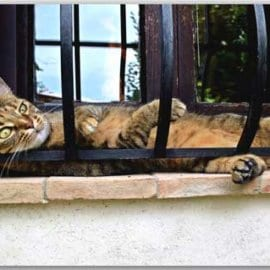 Postkarte Siesta-Cat