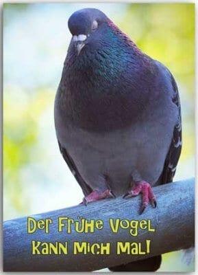 Postkarte Der frühe Vogel kann mich mal