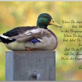 Postkarte In Frieden mit Dir