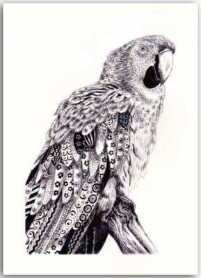Postkarte Papagei