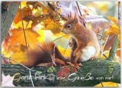 Postkarte Eichhörnchengrüße