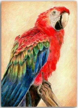 Postkarte Roter Papagei
