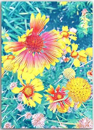 Postkarte Florales Entzücken