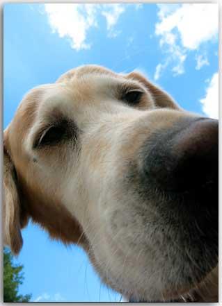 Postkarte Irma der Himmelhund