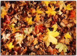 Postkarte mit Herbstlaub