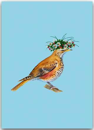 Postkarte Drossel