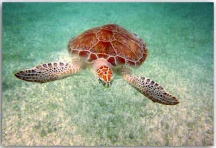 Postcard Meeresschildkröte 2