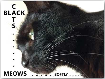 Postcard Black Cats