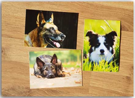 Angebot Drei Hunde-Set