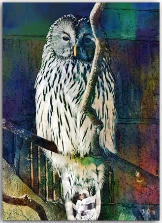 Postkarte Watercolor Eule