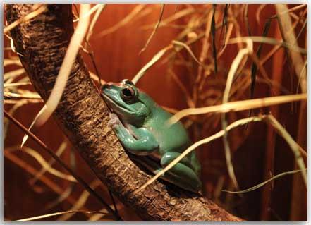 Postkarte Küss den Frosch