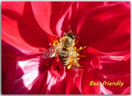 Postcard Bee friendly